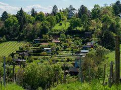 kleingärtensiedlung mitten in den weingärten...