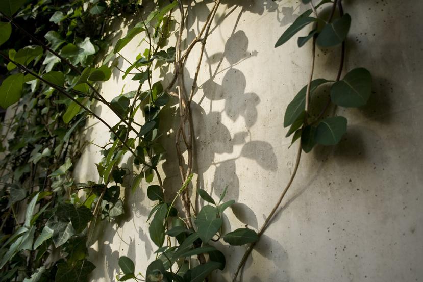kleterpflanze