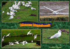 Kleves Vogelwelt