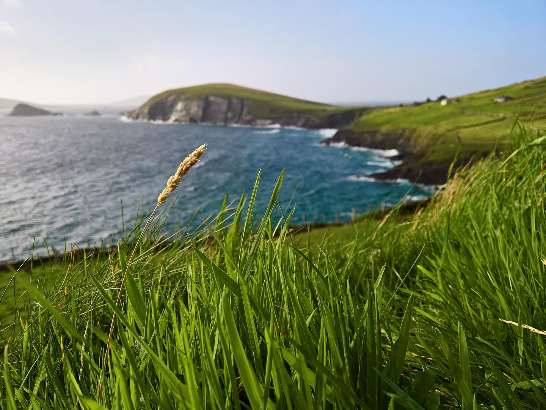 Klippen mit grünem Gras im Vordergrund; Kerry, Irland