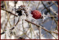 klirrende Kälte