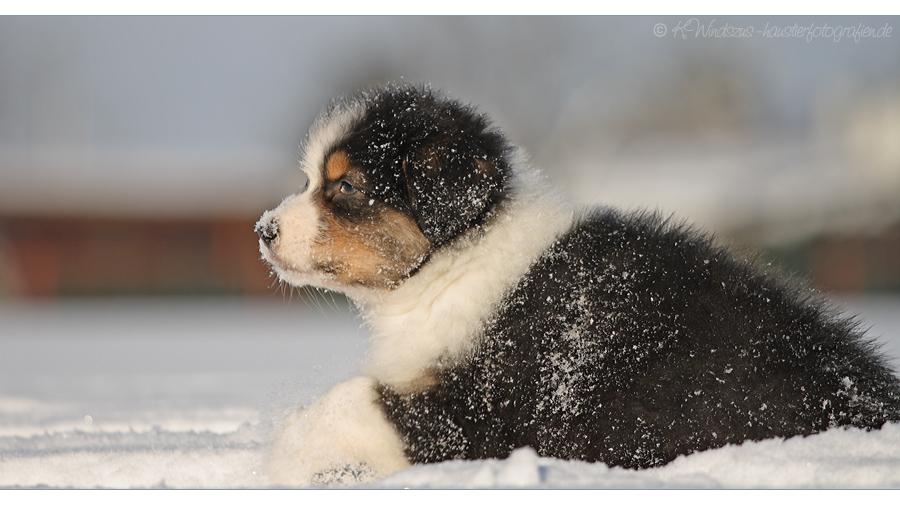 ... klitzekleines Schneeräupchen ...