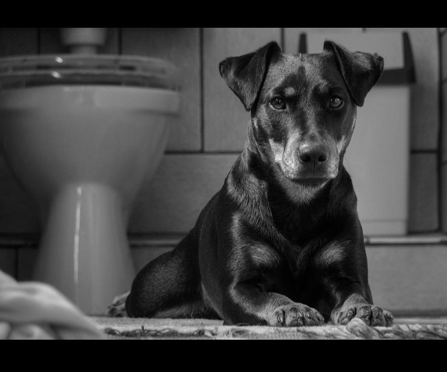 """""""Klo""""-Hund"""