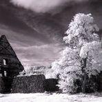 Kloster Altzella (1)