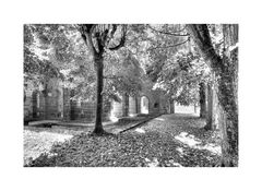 Kloster Arnsburg 3