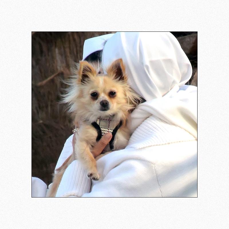 Klosterhund