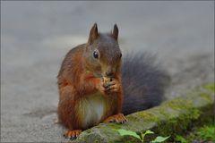 Knabber - Hörnchen