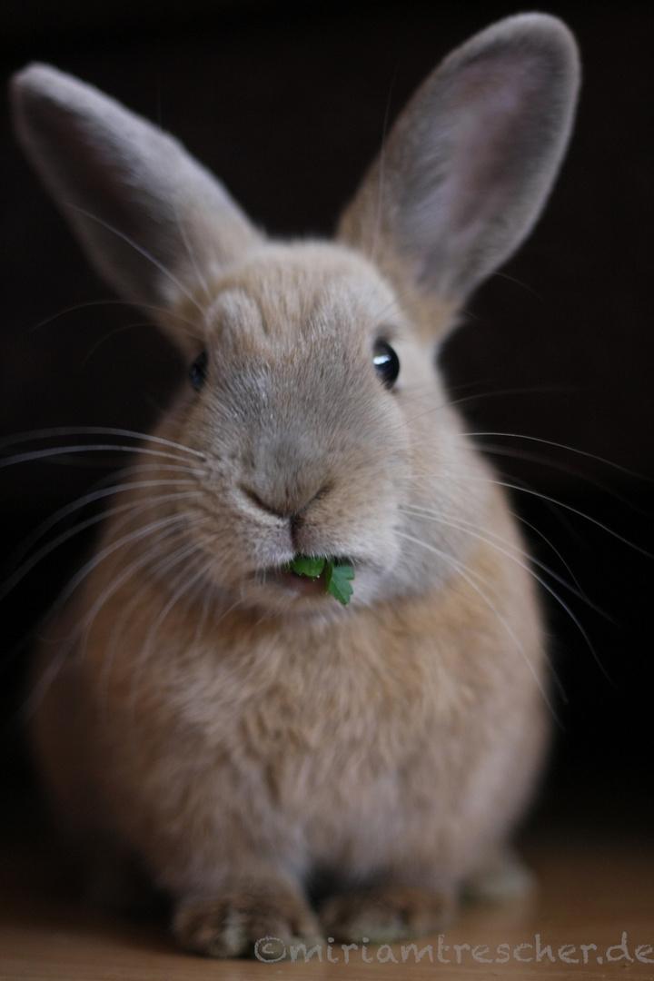 Knabberndes Kaninchen
