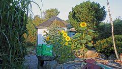 Knapp 40 Kg Sonnenblumenkerne wie hier in der Schubkarre...