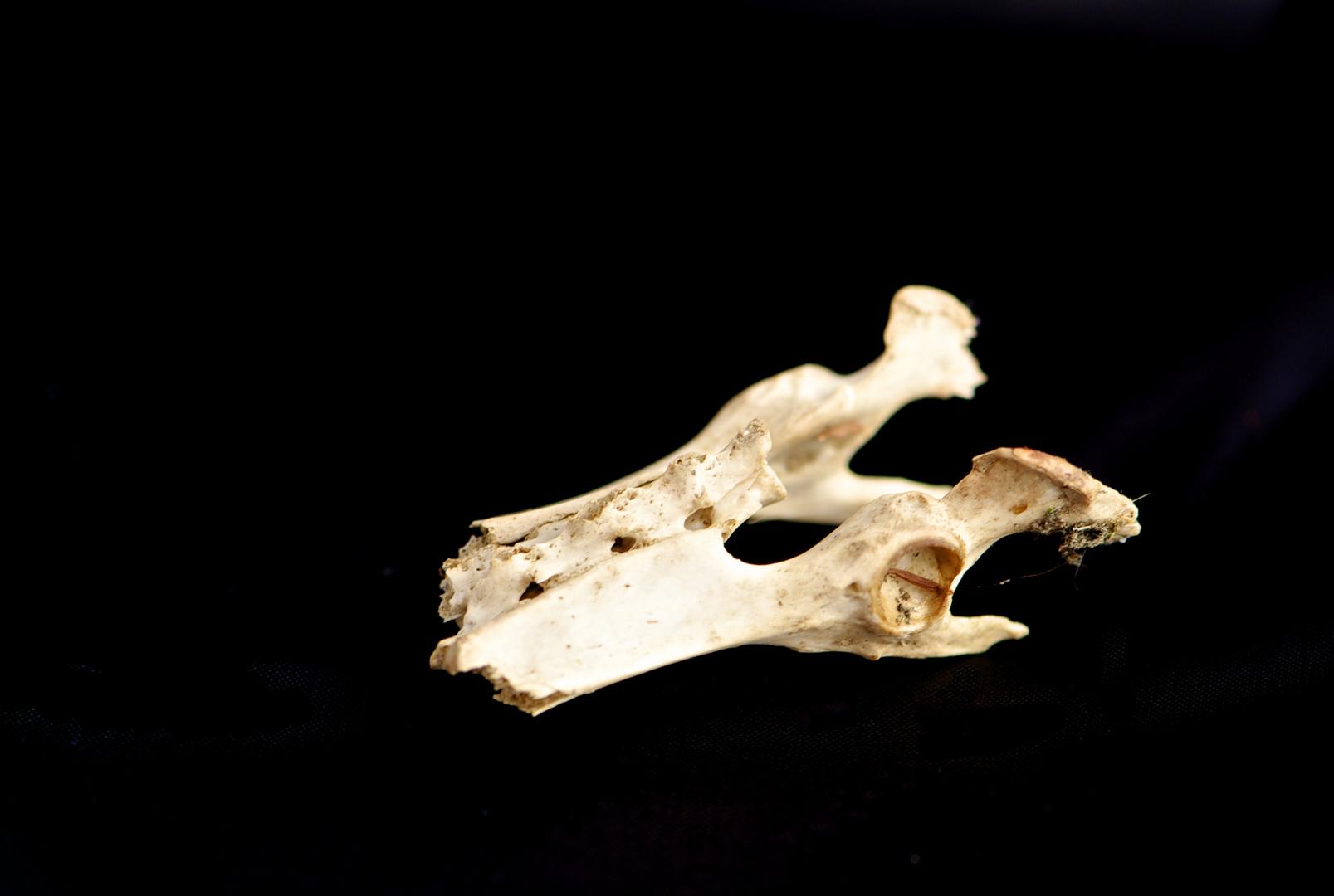 Knochen I