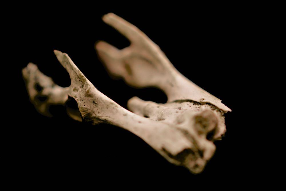 Knochen II