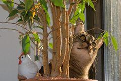 Knöpfchen prüft die Blätter ihres Schützlings