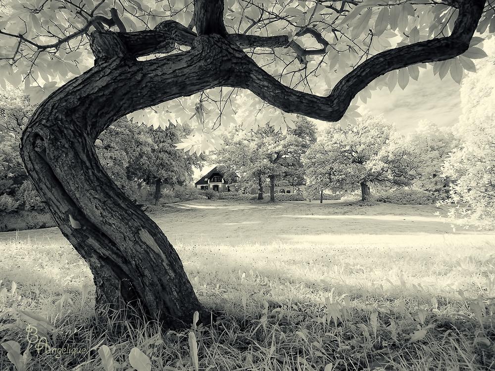 Knoops Park 1 (IR)