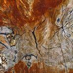 Knorrig - natürliche Strukturen (1)