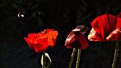 Knospe, Blüte und Frucht