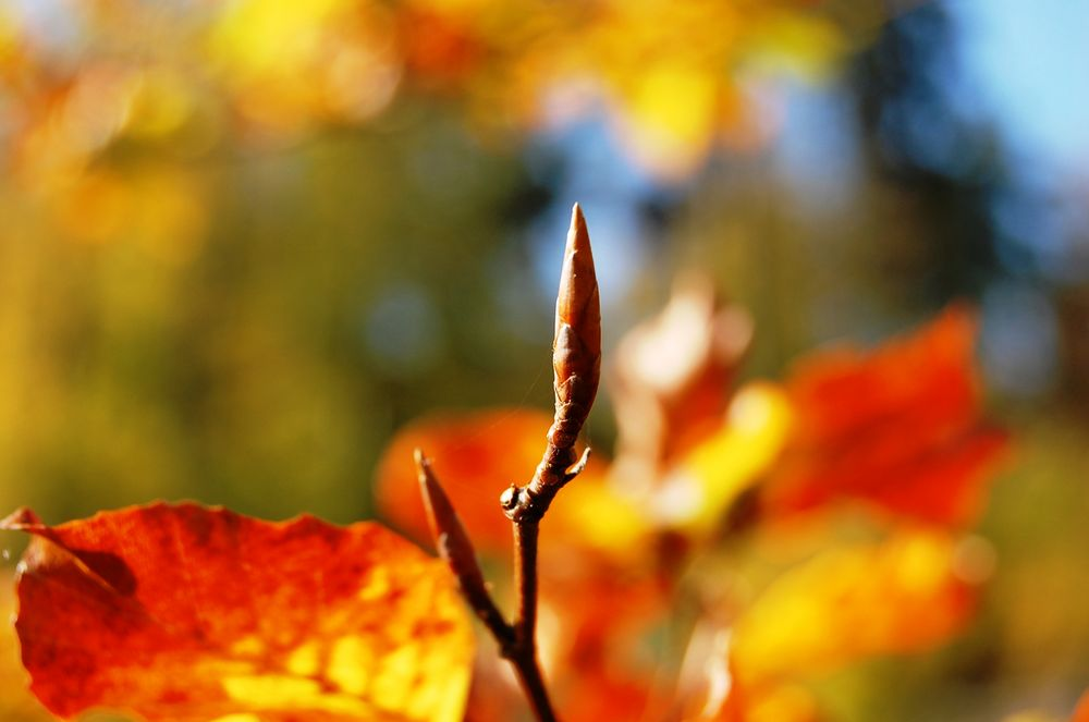 Knospe im Herbst