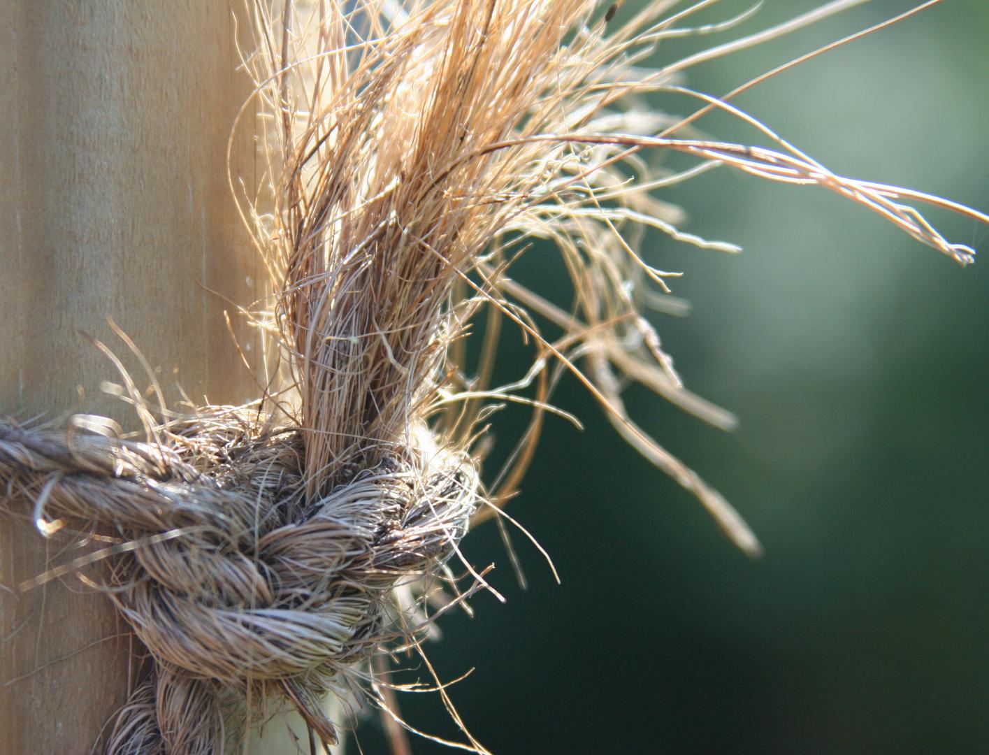 Knoten im Gegenlicht