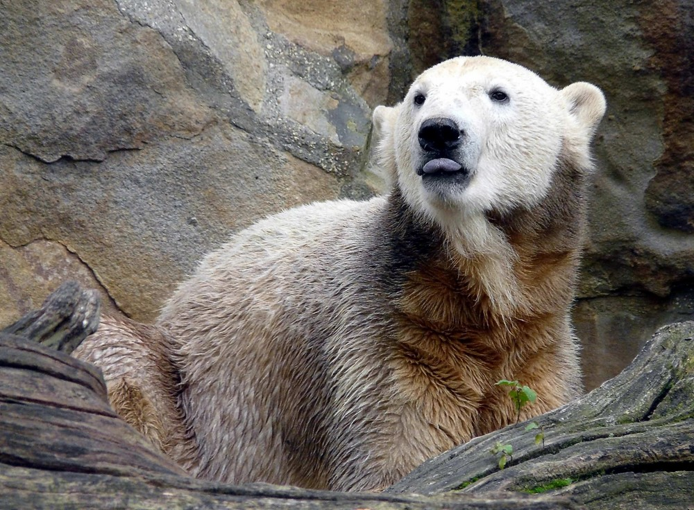 Knut - Bear necesseties