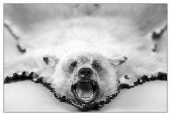 Knut ?