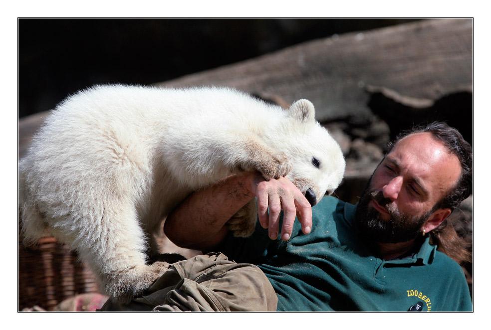 Knut, der Superstar