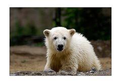 Knut tut sich gut,als Model