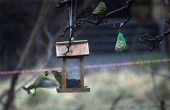 Knutschen im Vogelhäuschen ;)