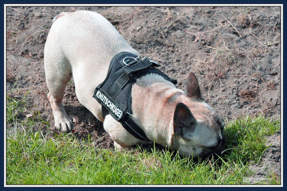 Knutschkugel sucht Hase