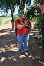Koala mit Aufpasser