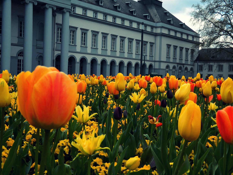 Koblenzer Schloss