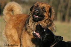 Kody & Gigi