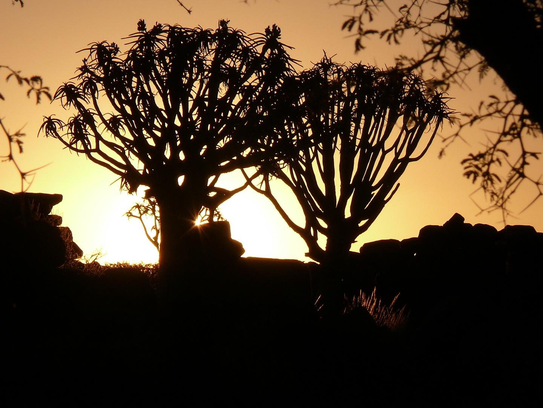 Köcherbäume bei Garas