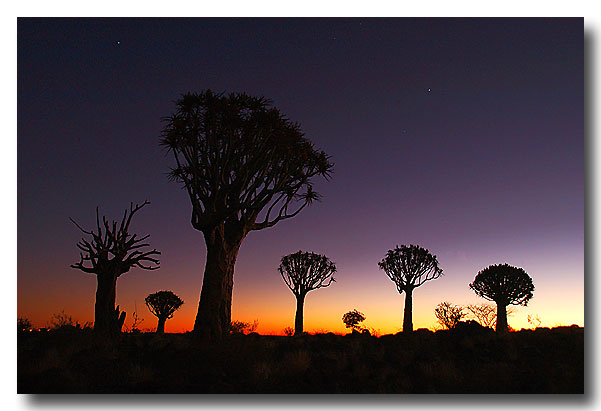 Köcherbaumwald in Namibia