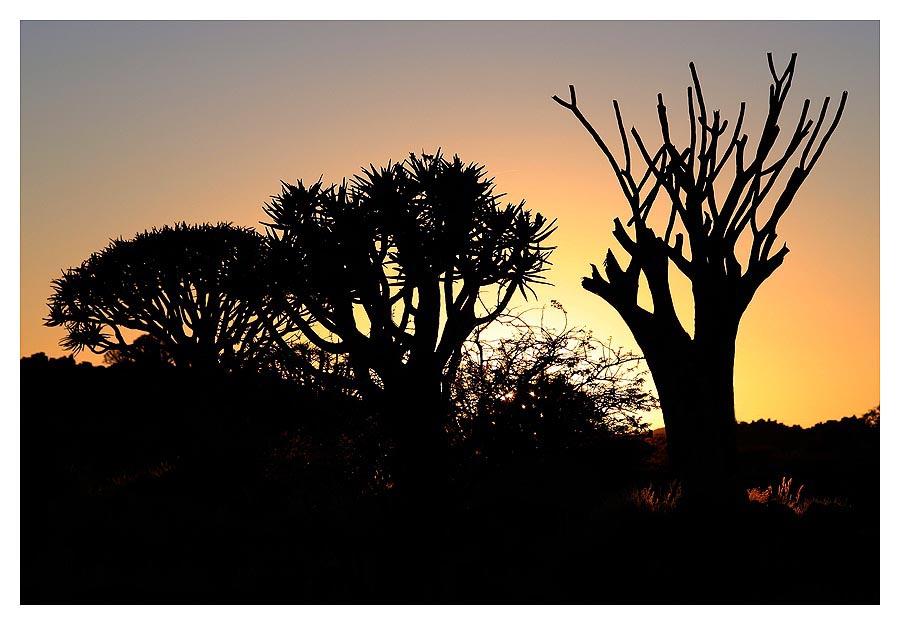 Köckerbäume