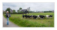 Koeienconcert