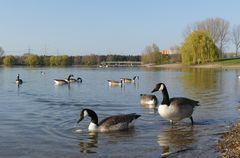 Köln - Am Fühlinger See