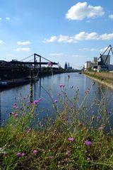 Köln aus alternativer Perspektive #6