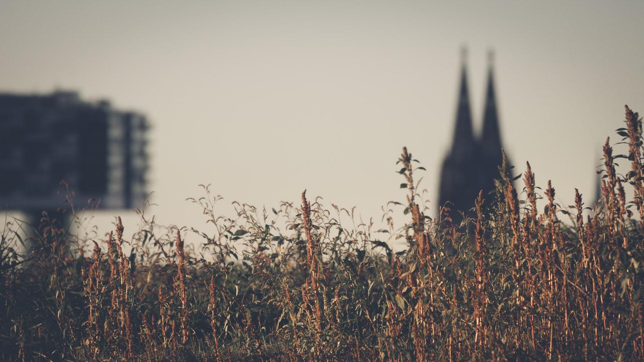Köln bei Tag