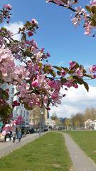 Köln hat Frühling