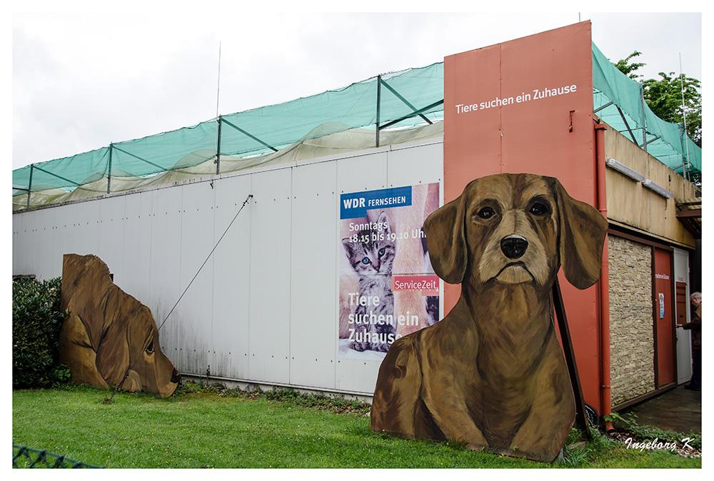 Köln - WDR-Studio Köln-Bocklemünd - Tiere suchen ein Zuhause