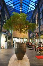 Kölner Stadtansichten