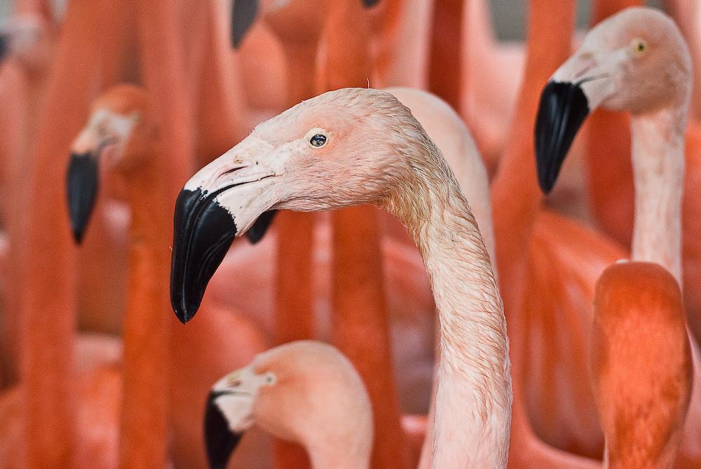 Kölner Zoo