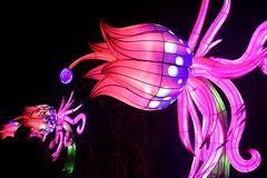Kölner Zoo - China Light Festival 15