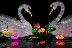 Kölner Zoo - China Light Festival 31