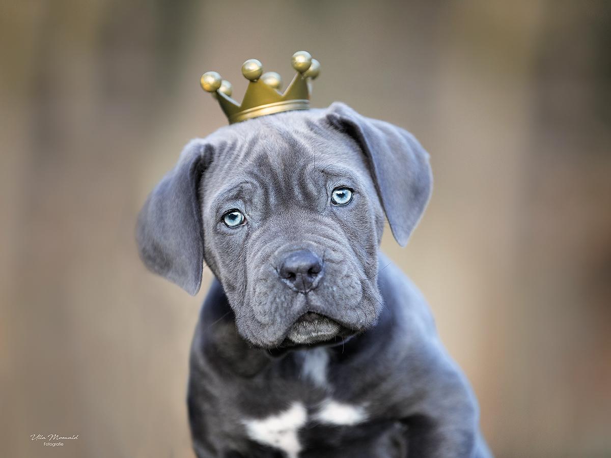 ...König Bruno...