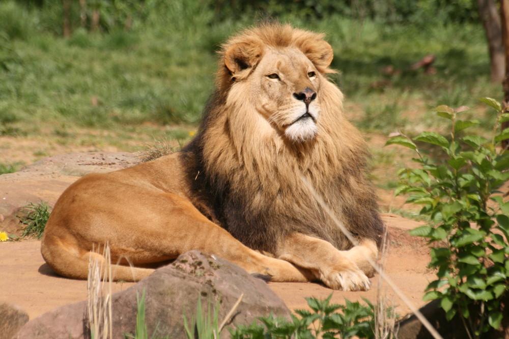 König der Steppe