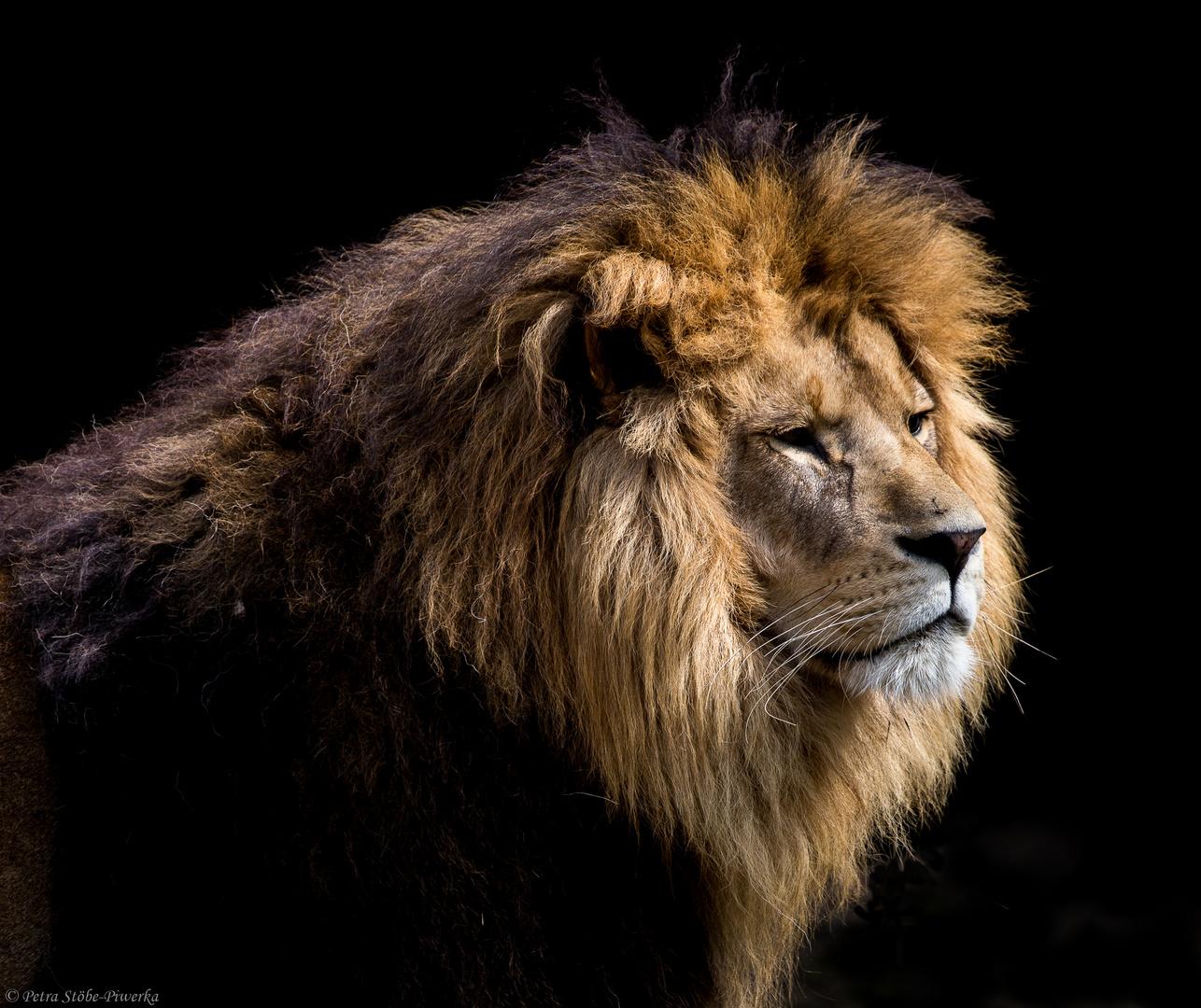 König Max