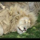 königlich schlafen