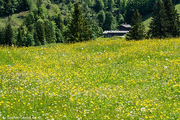 Königsalm - Blumenwiese