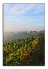 Königsbach #2