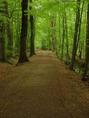 Königsdorfer Wald